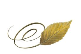 Spring Flowers, Autumn Leaves, Grapes Swirly Beech Leaf Artwork