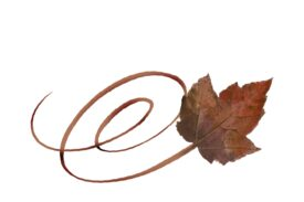 Spring Flowers, Autumn Leaves, Grapes Swirly Boxelder Leaf Artwork