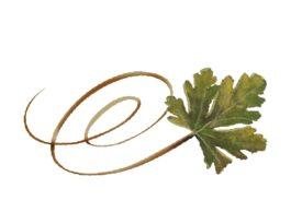 Spring Flowers, Autumn Leaves, Grapes Swirly Chestnut Leaf Artwork