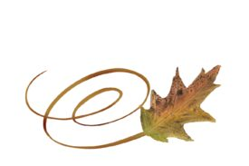 Spring Flowers, Autumn Leaves, Grapes Swirly Cypress Leaf Artwork