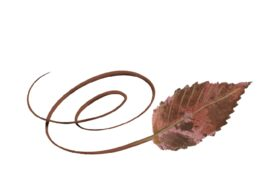 Spring Flowers, Autumn Leaves, Grapes Swirly Ironwood Leaf Artwork