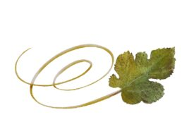 Spring Flowers, Autumn Leaves, Grapes Swirly Mulberry Leaf Artwork
