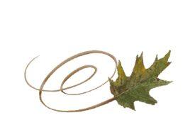 Spring Flowers, Autumn Leaves, Grapes Swirly Oak Leaf Artwork