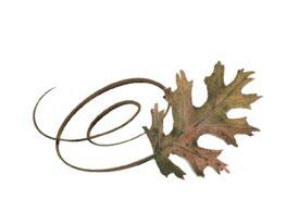 Spring Flowers, Autumn Leaves, Grapes Swirly Pin Oak Leaf Artwork