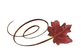 Spring Flowers, Autumn Leaves, Grapes Swirly Red Maple Leaf Artwork