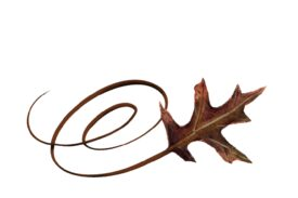 Spring Flowers, Autumn Leaves, Grapes Swirly Red Oak Leaf Artwork