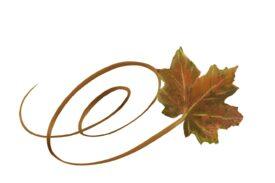 Spring Flowers, Autumn Leaves, Grapes Swirly Sugar Maple Leaf Artwork