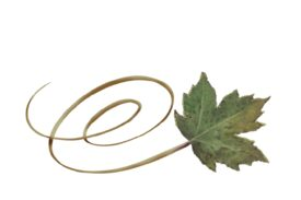 Spring Flowers, Autumn Leaves, Grapes Swirly Sycamore Leaf Artwork