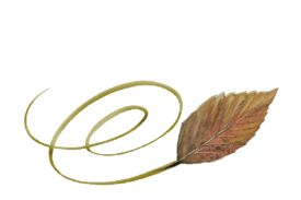 Spring Flowers, Autumn Leaves, Grapes Swirly Walnut Leaf Artwork