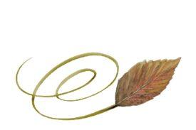 Spring Flowers, Autumn Leaves, Grapes Swirly Walnut Leaf Artwork