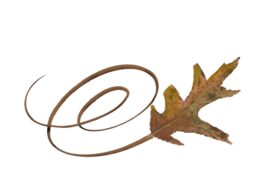 Spring Flowers, Autumn Leaves, Grapes Swirly White Oak Leaf Artwork
