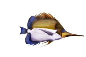 Seashells, Fish, and Beach True Blue Artwork