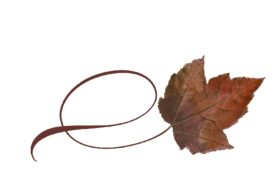 Spring Flowers, Autumn Leaves, Grapes Twisty Boxelder Leaf Artwork