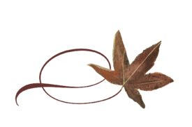 Spring Flowers, Autumn Leaves, Grapes Twisty Buckeye Leaf Artwork