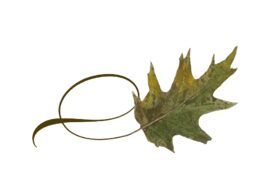 Spring Flowers, Autumn Leaves, Grapes Twisty Oak Leaf Artwork