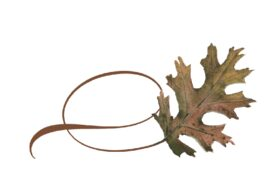 Spring Flowers, Autumn Leaves, Grapes Twisty Pin Oak Leaf Artwork
