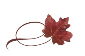 Spring Flowers, Autumn Leaves, Grapes Twisty Red Maple Leaf Artwork
