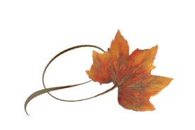 Spring Flowers, Autumn Leaves, Grapes Twisty Rock Maple Leaf Artwork