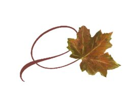Spring Flowers, Autumn Leaves, Grapes Twisty Sugar Maple Leaf Artwork
