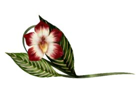 Spring Flowers, Autumn Leaves, Grapes Vanda Orchid Artwork