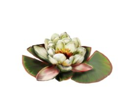 Spring Flowers, Autumn Leaves, Grapes Water Lily Artwork