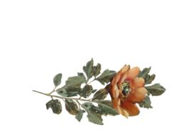 Spring Flowers, Autumn Leaves, Grapes Wild Rose (orange) Artwork