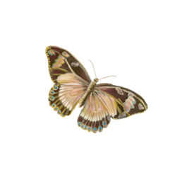 Butterfly Illustration 02 Birds and Butterflies Wedding Illustration