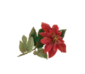 Poinsettia Winter and Holiday Wedding Illustration