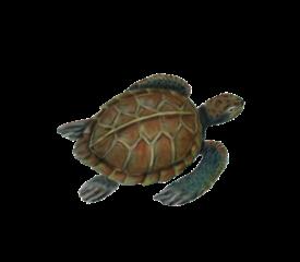 Sea Turtle Seashells, Fish, and Beach Wedding Illustration