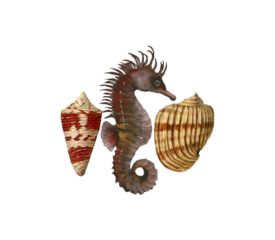 Seahorse Pattern Seashells, Fish, and Beach Wedding Illustration