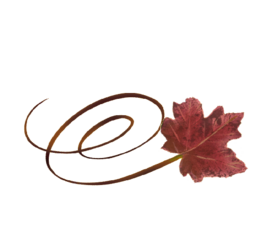 Swirly Red Maple Leaf Spring Flowers, Autumn Leaves, Grapes Wedding Illustration