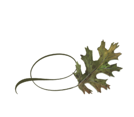 Twisty Black Oak Leaf Spring Flowers, Autumn Leaves, Grapes Wedding Illustration