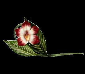 Vanda Orchid Illustration Spring Flowers, Autumn Leaves, Grapes Wedding Illustration