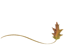 Wispy Cypress Leaf Spring Flowers, Autumn Leaves, Grapes Wedding Illustration