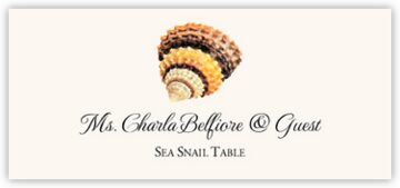 Seashell Assortment