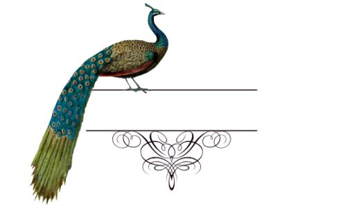 Monogram: Peacock Flourish Indian Monogram