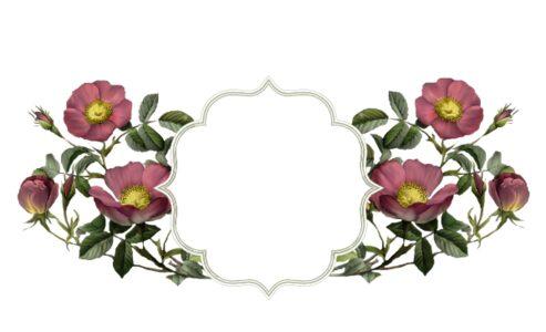 Monogram: Wild Pink Rose Frame