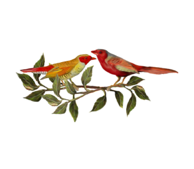 Two Red Birds Birds and Butterflies Wedding Illustration