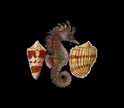 Seahorse Pattern Seashells, Fish, and Beach Wedding Illustration
