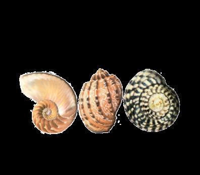 Seashell Pattern 01 Seashells, Fish, and Beach Wedding Illustration