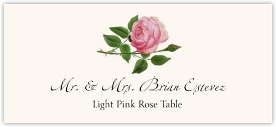 Light Pink Rose