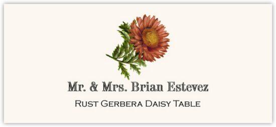 Rust Gerbera Daisy