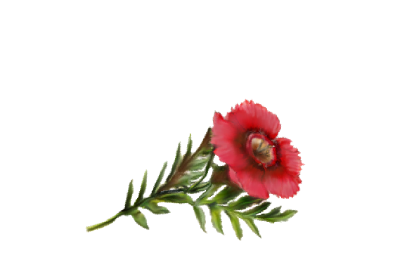Spring Flowers, Autumn Leaves, Grapes Anemone Artwork