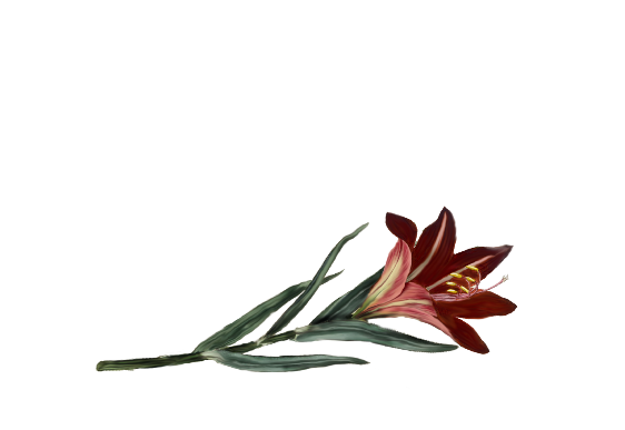 Spring Flowers, Autumn Leaves, Grapes Asiatic Lily Artwork