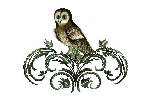 Birds and Butterflies Sir Hooterton Artwork