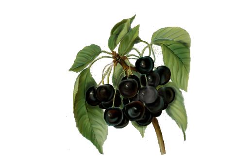 Spring Flowers, Autumn Leaves, Grapes Black Cherries Artwork