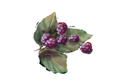 Spring Flowers, Autumn Leaves, Grapes Blackberries 01 Artwork