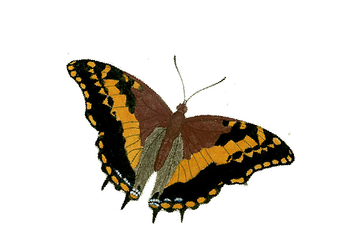 Birds and Butterflies Butterfly Illustration 25 Artwork