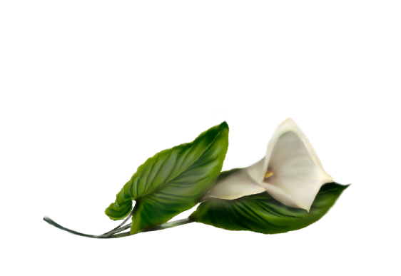 Spring Flowers, Autumn Leaves, Grapes Calla Lily (white) Artwork