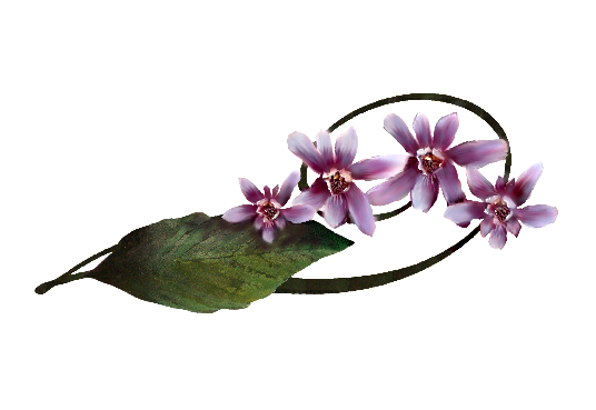 Spring Flowers, Autumn Leaves, Grapes Calypso Orchid Artwork